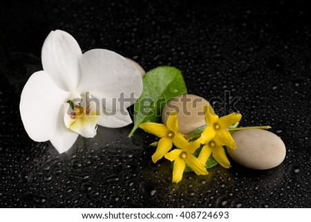 pebble stones and green leaf with water drop and orchid flower, ZEN stone, on black, spa tranquil scene concept - stock photo