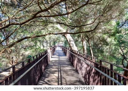 Pedestrian Bridge with tree branches crawling across in King's Park, Western Australia/King's Park Pedestrian Bridge/Botanical Garden in Perth - stock photo