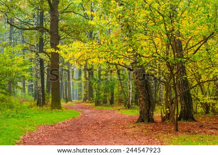 pedestrian path in autumn city forest park - stock photo