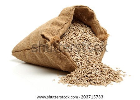 Peeled sunflower seeds pile  - stock photo
