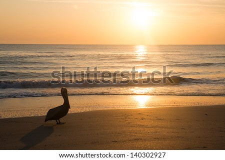 Pelican and Sunrise in Florida. - stock photo