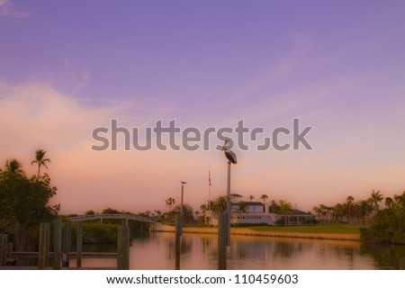 Pelican on the bay - stock photo