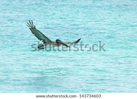 Pelican Over Water - stock photo