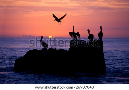 Pelican rest in sunrise/sunset in the pacific ocean off of cabo san lucas - stock photo