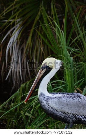 Pelican sitting among palm trees - stock photo