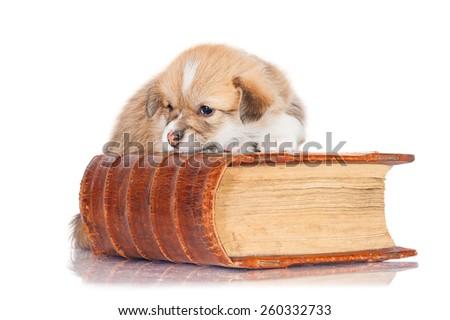 Pembroke welsh corgi puppy sleeping on the book - stock photo