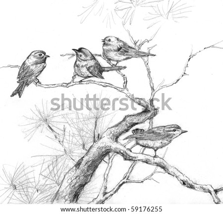 Pencil drawing of four sparrows on branches of a pine tree - stock photo