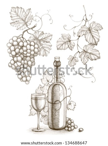 Pencil drawing of wine bottle and grape - stock photo