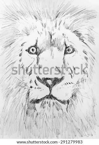 Pencil hand drawing sketch of Lion head on white paper - stock photo