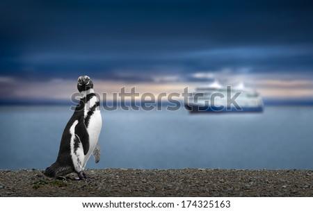 Penguin and Cruise Ship in Patagonia. Awe inspiring travel image. - stock photo
