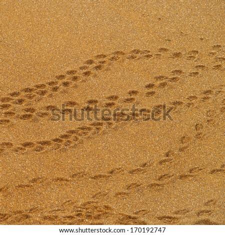 Penguin footprint - stock photo