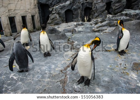 Penguin in Action - stock photo