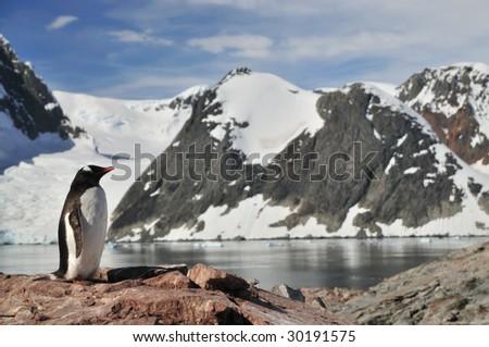 Penguin in Antarctica - stock photo