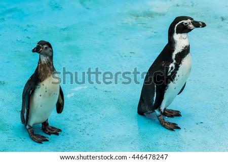 Penguin in the  zoo  - stock photo