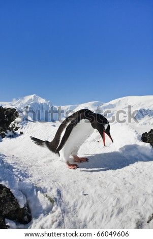 penguin on the rocks covered with snow - stock photo