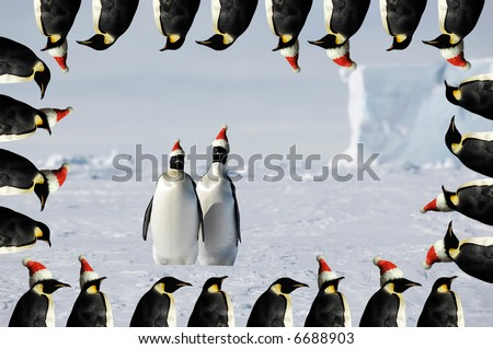 Penguin pair christmas card - stock photo