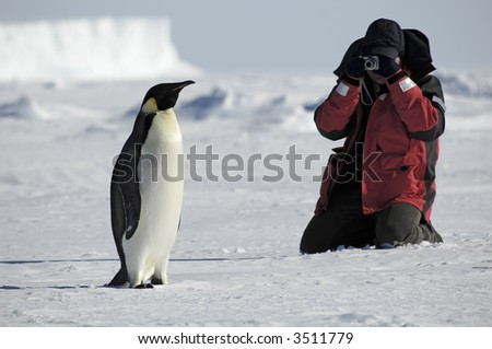 Penguin photos - stock photo