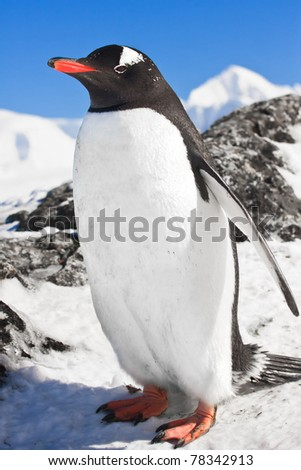 penguin standing on the rocks covered snow - stock photo