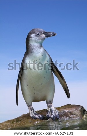 Penguin with blue sky - stock photo