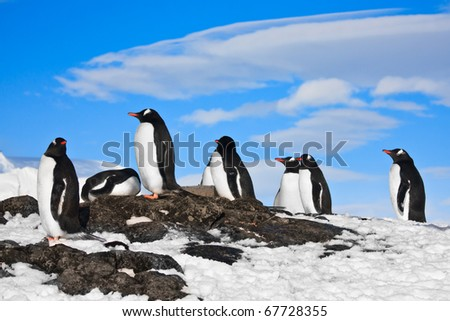 penguins dreaming sitting on a rock in Antarctica - stock photo