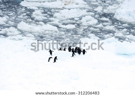Penguins on the ice piece in the ocean - stock photo