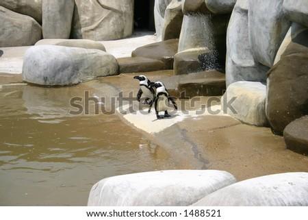 Penguins Standing beside Water - stock photo
