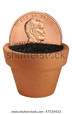 penny growing in flower pot macro - stock photo