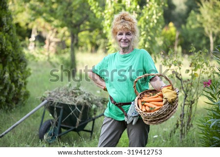 Pensioner in the garden with a basket full carotts - stock photo