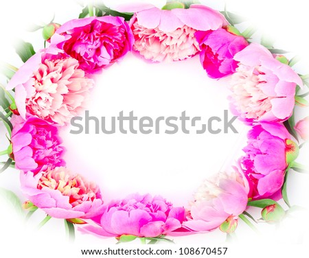 Peony flowers border on white background - stock photo