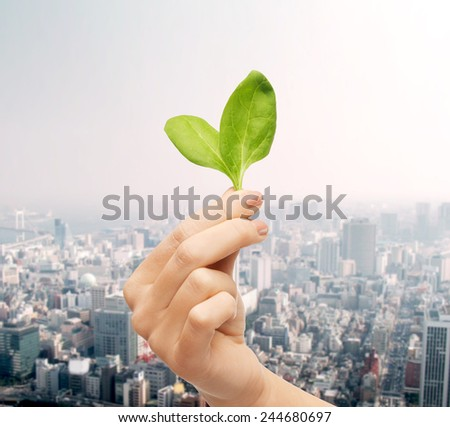 people, ecology, biology and environment concept - close up of woman hand with green sprout over city background - stock photo