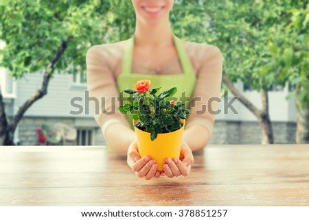 people, gardening and flowers concept - close up of woman hands holding roses bush in flower pot at over summer house background - stock photo
