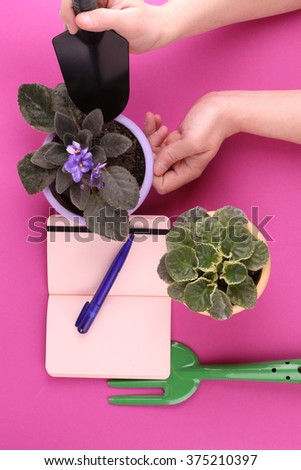 people, gardening, flower planting and profession concept - close up of man or gardener hands planting violet to flower pot at home - stock photo