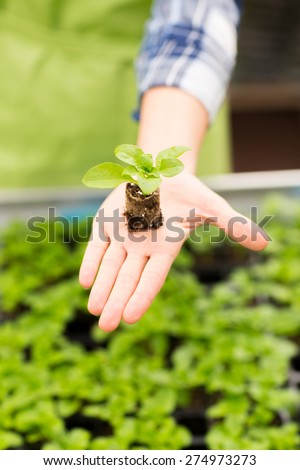 people, gardening, planting and profession concept - close up of woman hand holding seedling sprout at greenhouse - stock photo