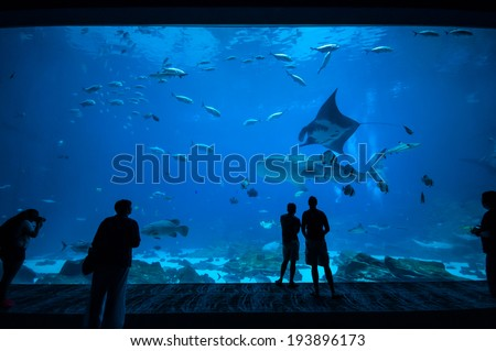 People observing fish at the aquarium 3 - stock photo