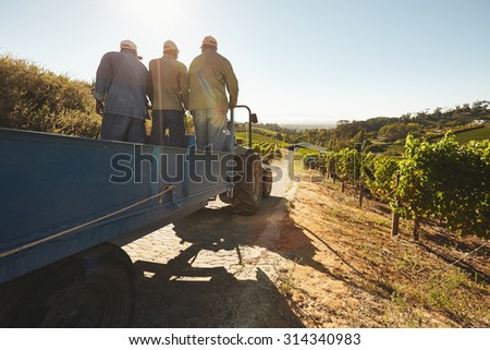 People riding in a tractor wagon through grape farms. Vineyard worker on a wagon ride at farm. - stock photo