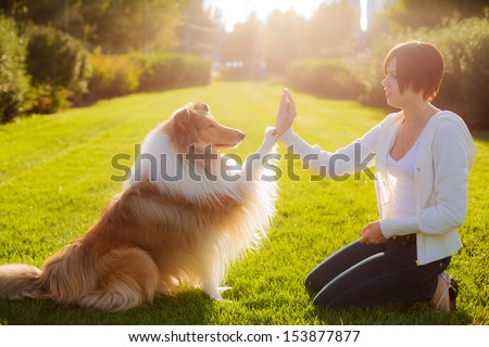 people training a dog Collie. Collie gives his paw to her mistress - stock photo