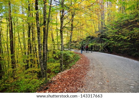 people walking on path in autumn - stock photo
