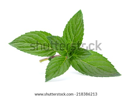Peppermint closeup leaf isolated on white background - stock photo