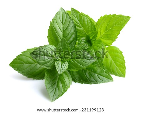 Peppermint leaves - stock photo