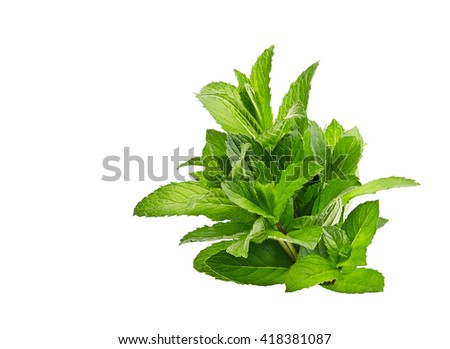 peppermint on isolated on white - stock photo