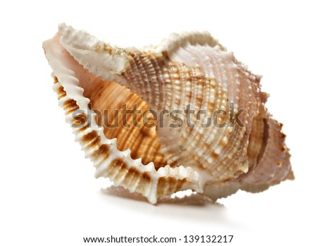 Perfect beautiful sea shell on white background - very shallow depth of field - stock photo