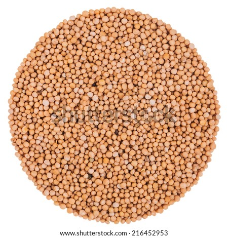 Perfect Circle of Mustard Seeds Isolated on White Background - stock photo