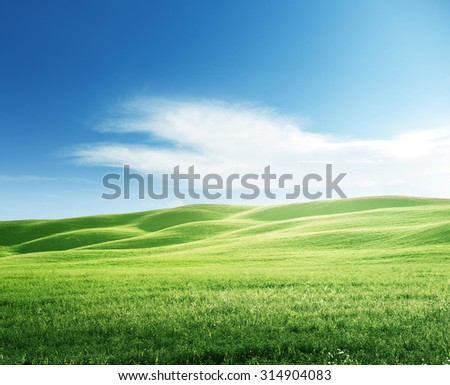perfect field of spring grass - stock photo