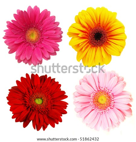 Perfect spring daisies collection isolated on white - stock photo