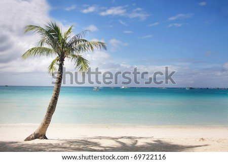 perfect tropical beach and palm tree - stock photo