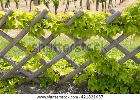 pergola fence with leaves - stock photo