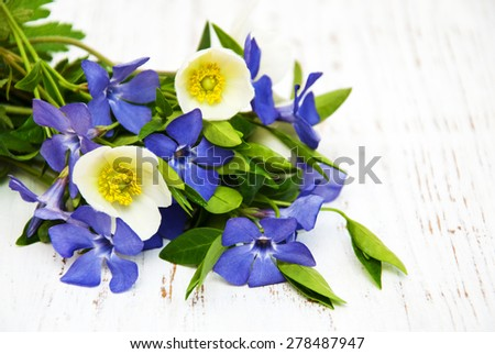 periwinkle and spring anemone on a wooden background - stock photo