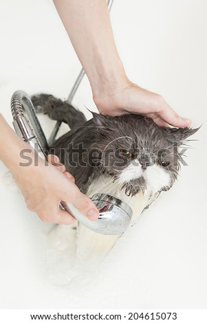 Persian breed cat enjoing a bath in a bathtub - stock photo