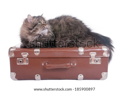 Persian cat lying on vintage suitcase over white background - stock photo