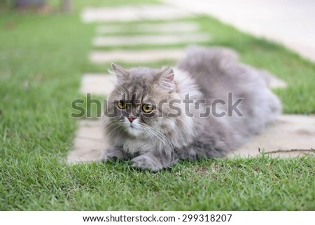 Persian cat relax on green grass - stock photo